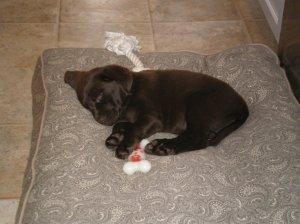 Sage, puppy